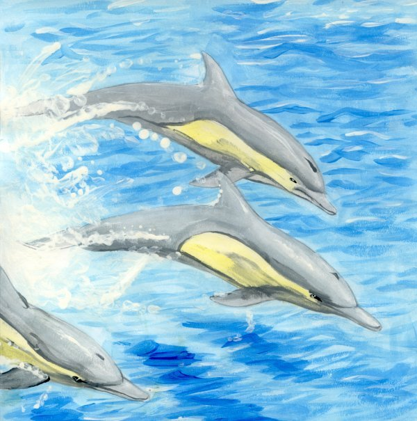 art_project_dolphins_by_shadowedlight