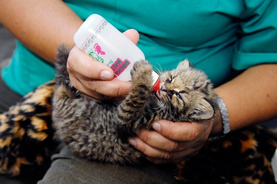 chile-cat