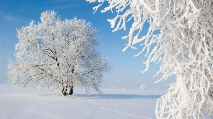 hoarfrost-germany-tree-getty_980x551