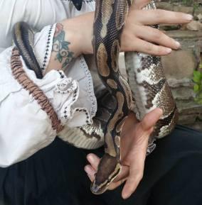 ball-python-6