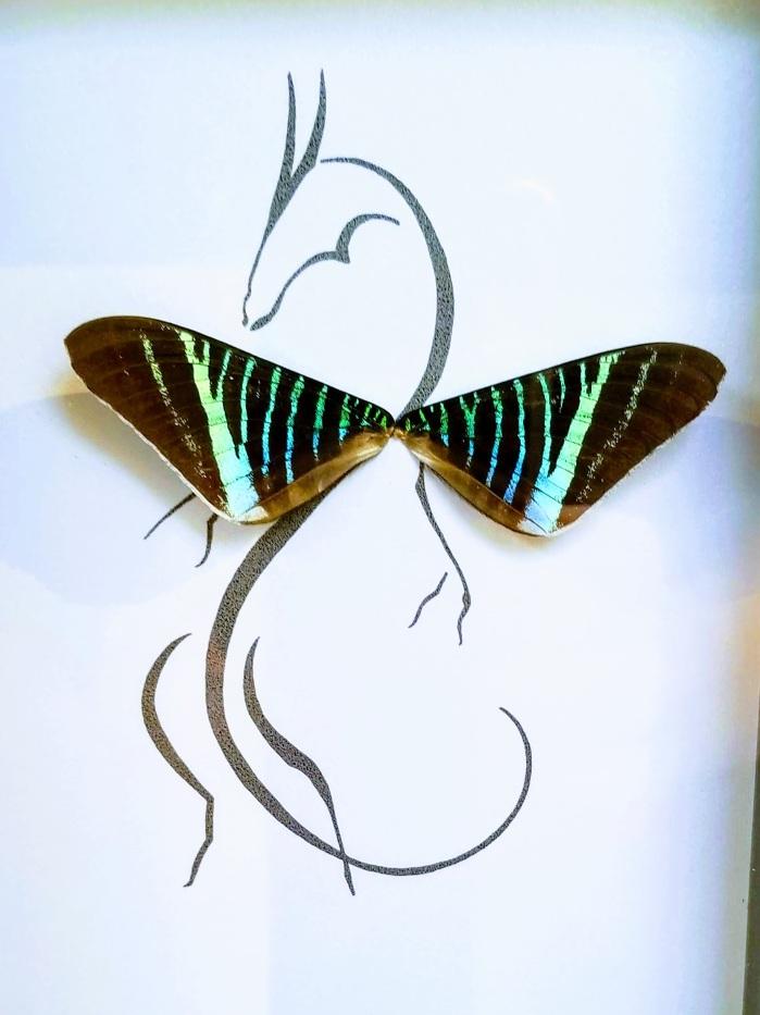 Isms Butterfly Art 04